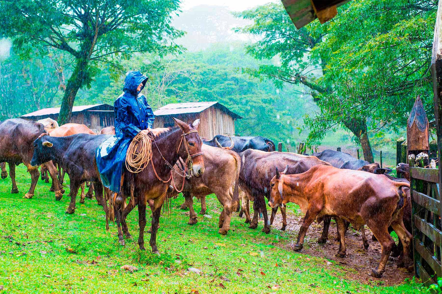 Finca agroturística, Matagalpa