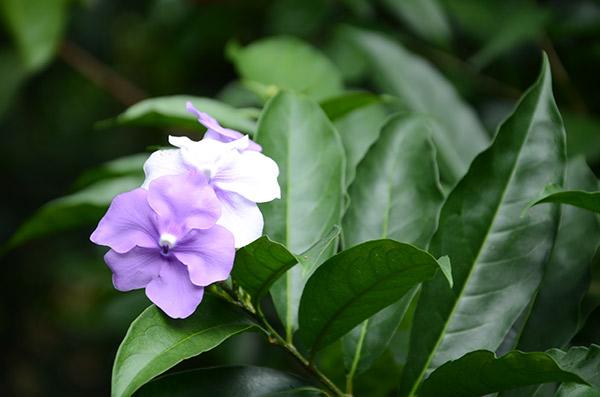 Flora_achuapa_naturaleza_gal2